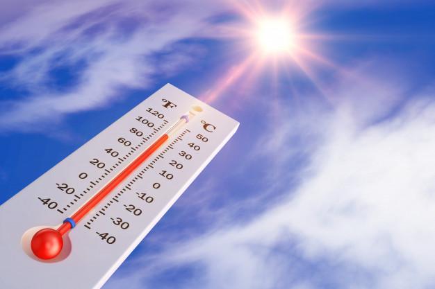 As formigas prateadas capazes de resistir a temperaturas de 70ºC