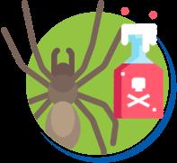 10 curiosidades sobre aranhas