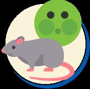 Tipos de Ratos