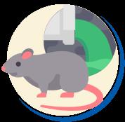 Quantidade de Ratos no Esgoto