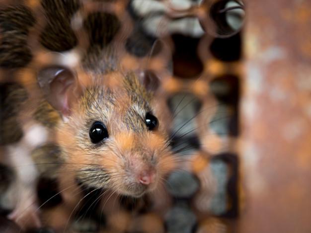 Supermercado é interditado por falta de alvará e infestação de roedores