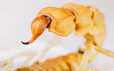 Escorpião amarelo: Guia Antinsect Uniprag Verão contra pragas