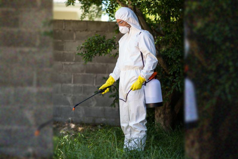 Dedetizadora em Porto Alegre: garanta uma equipe qualificada para o controle de pragas