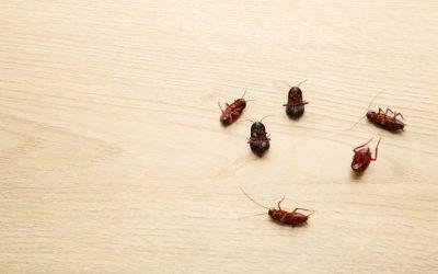 As baratas não ficam em isolamento social! Proteja-se dessas pragas urbanas!
