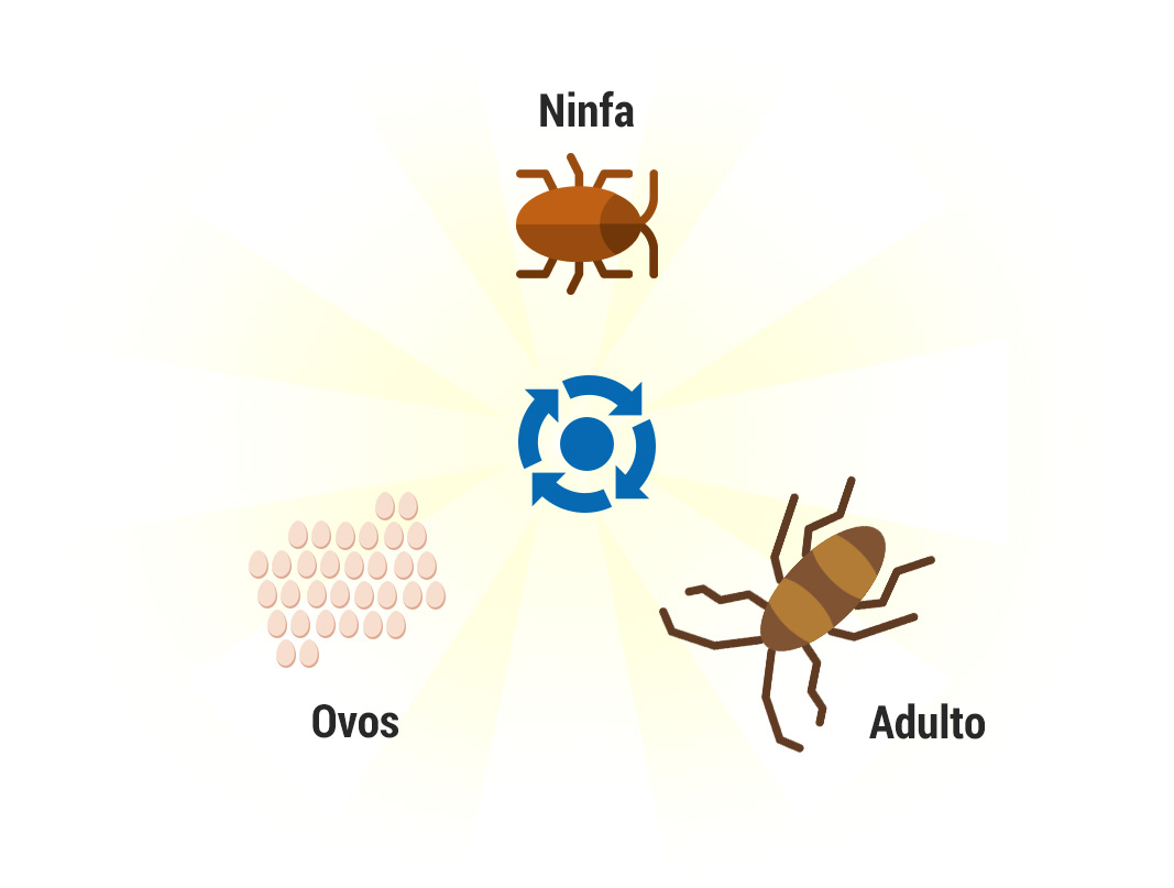 Ciclo de vida abelhas, vespas e marimbondos - Controle de Pragas