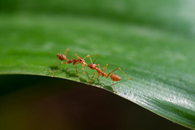 Formigas no ambiente: Guia Antinsect Uniprag Verão contra pragas