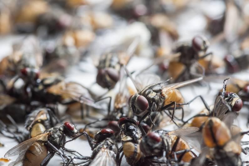 Controle de insetos alados: conheça algumas opções